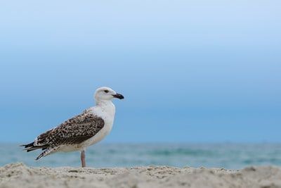 white and gray bird on brown sand during daytime emerald isle zoom background