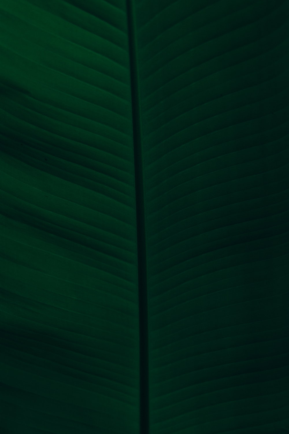 green textile in close up photography