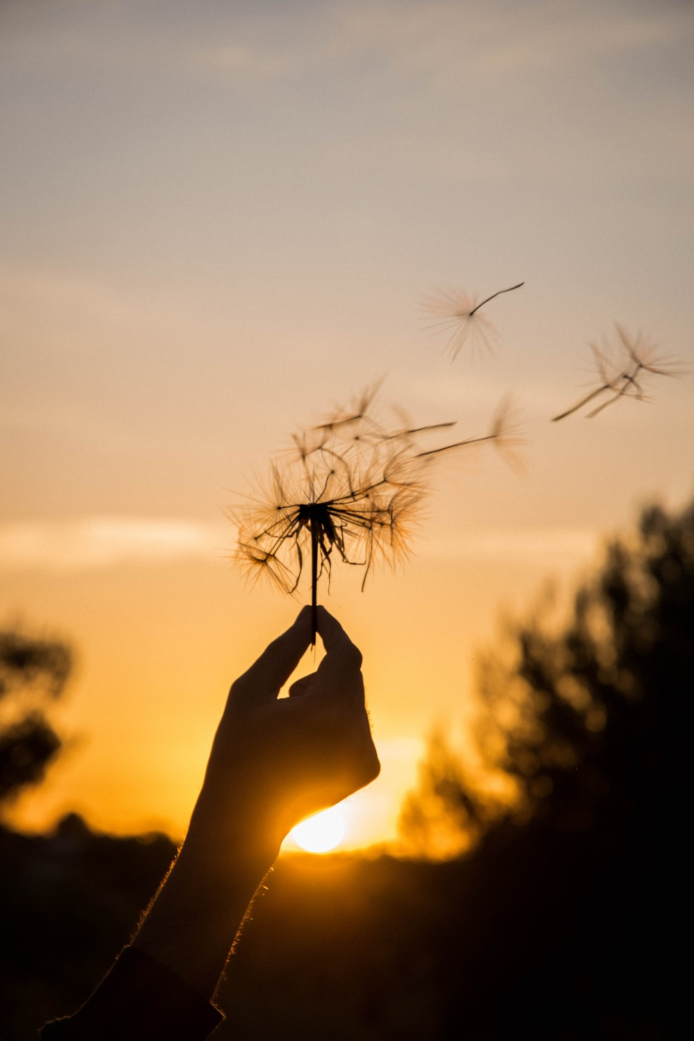 silhouette of person holding flower during sunset