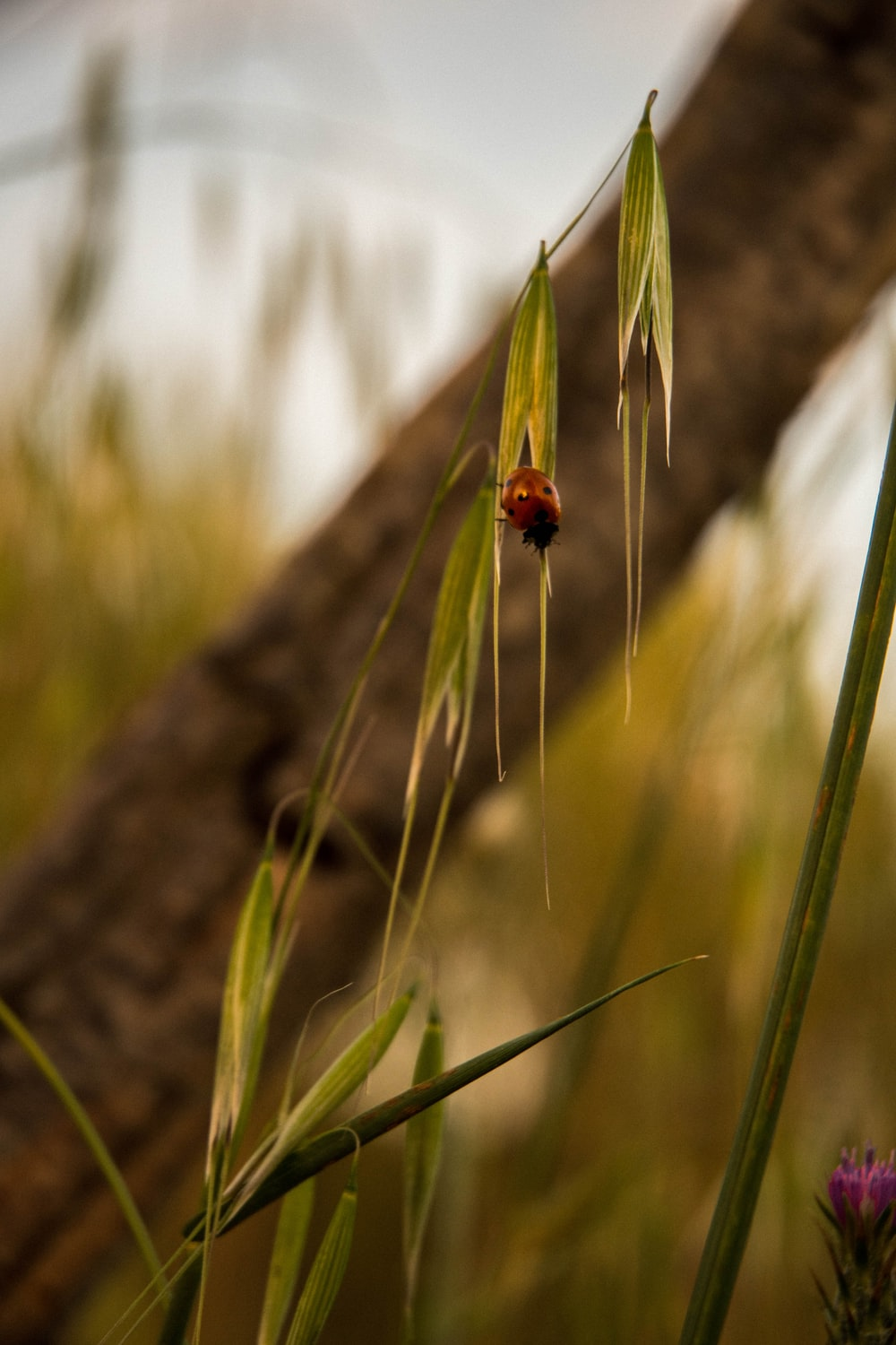 red ladybug perched on green plant during daytime