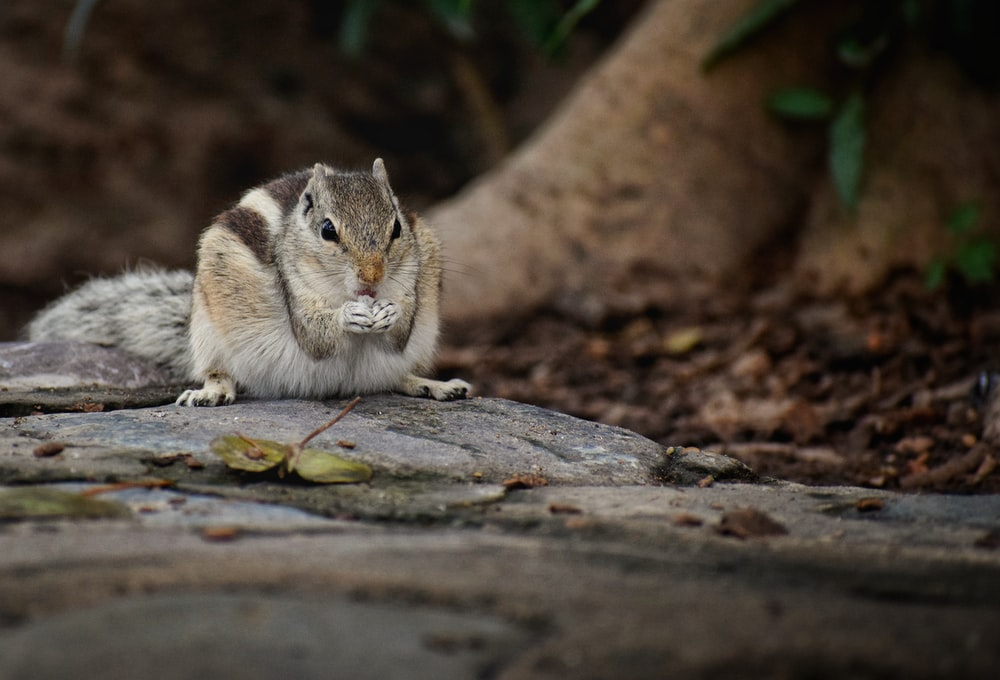 brown and white squirrel on brown tree log