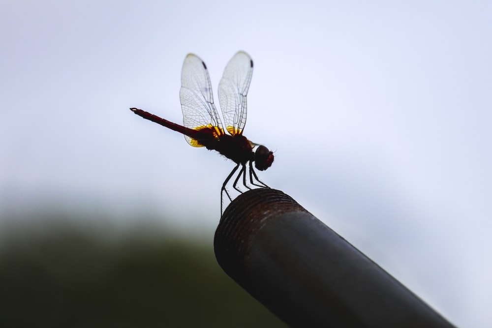 brown and black dragonfly on brown stick during daytime