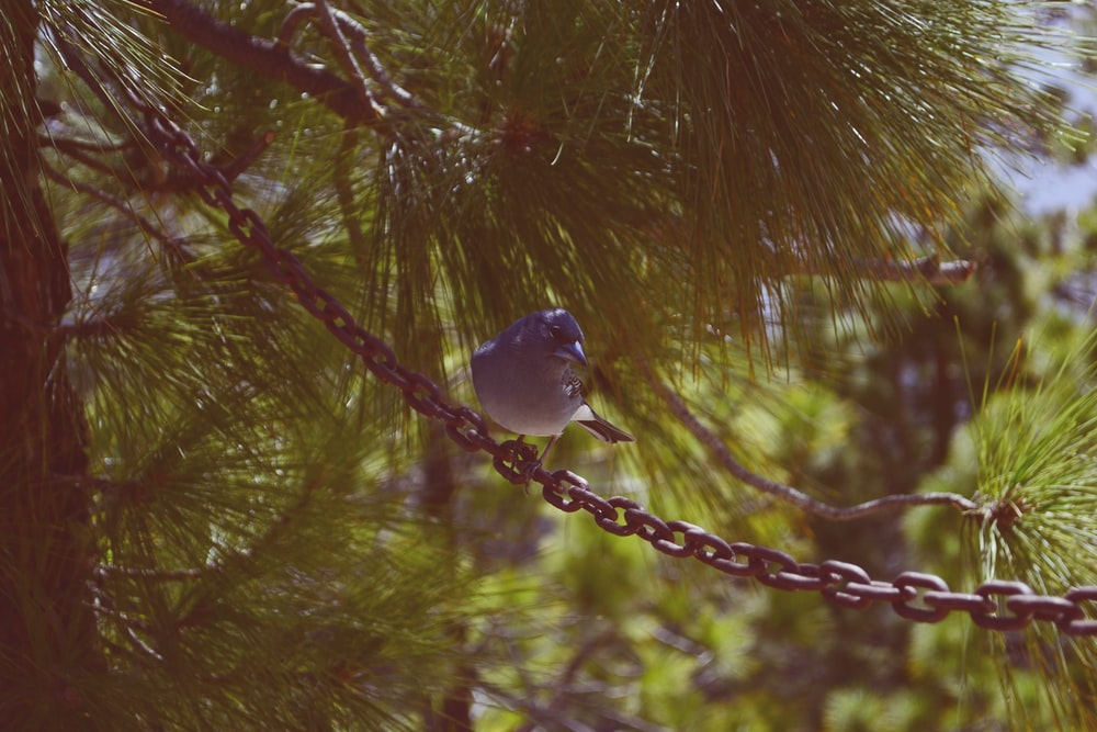 white and gray bird on brown tree branch