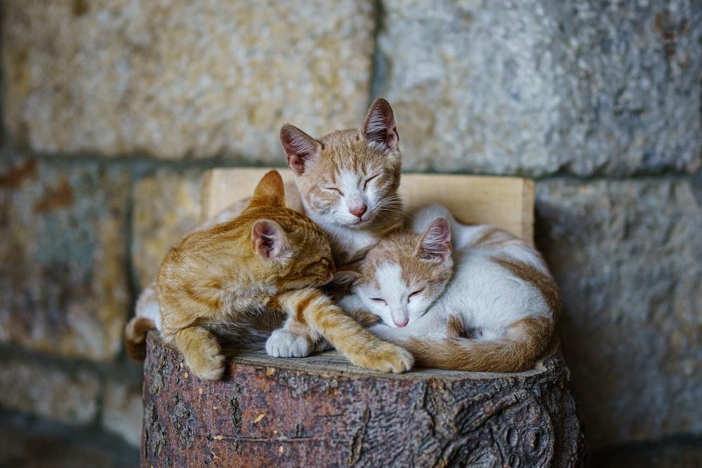 orange tabby cat sleeping on brown wooden log