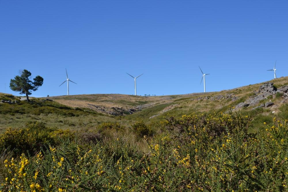 white wind turbines on green grass field under blue sky during daytime