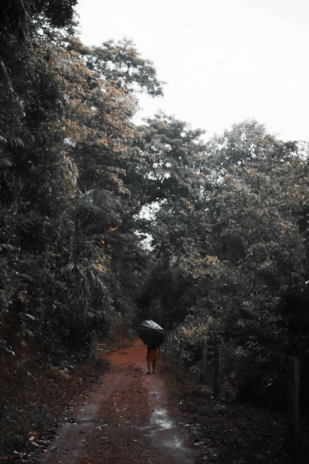 person in black jacket and red backpack walking on pathway between green trees during daytime