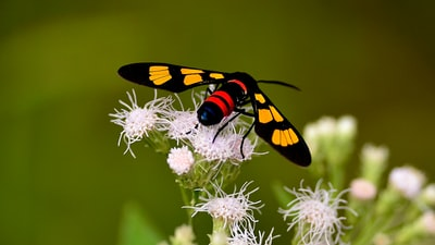 yellow and black butterfly on white flower
