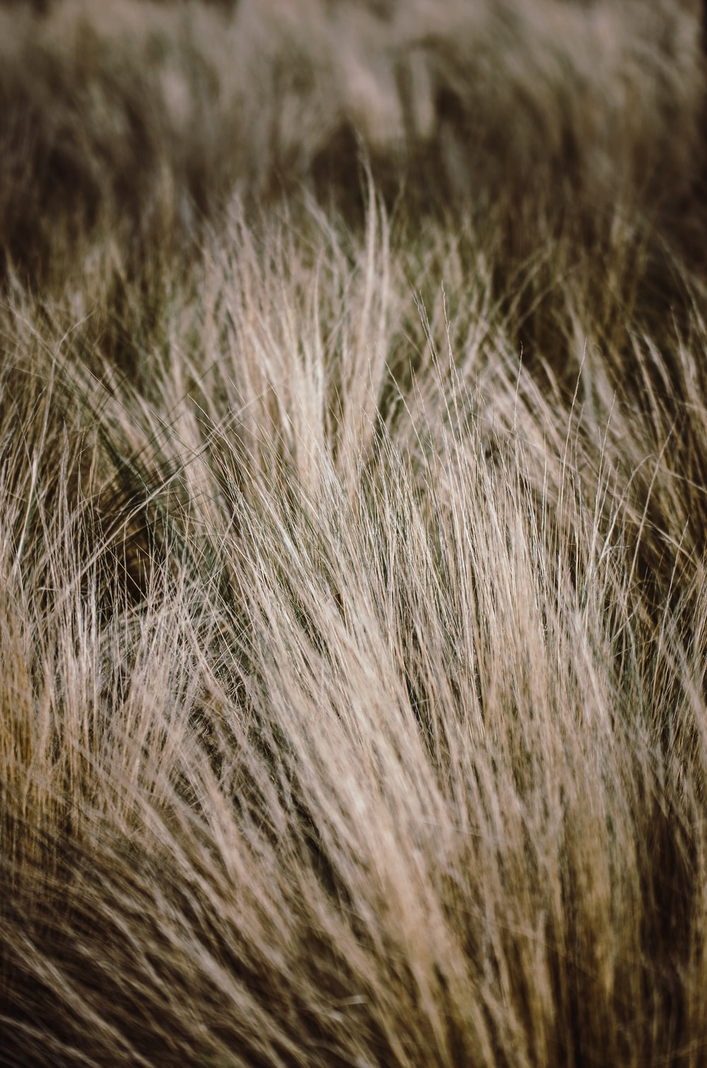 white and brown grass in close up photography