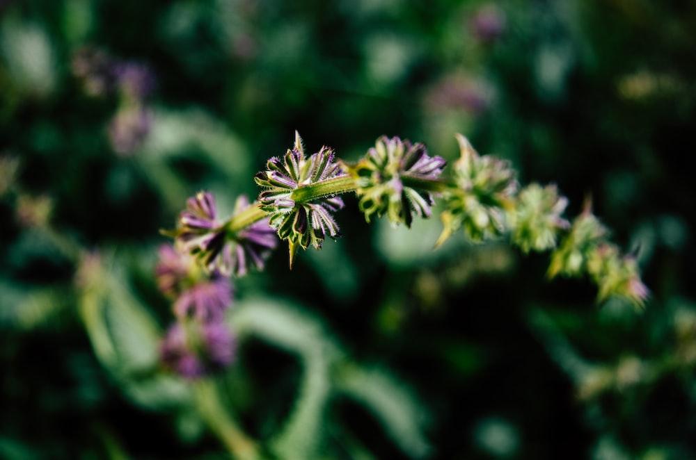 green and purple flower in tilt shift lens