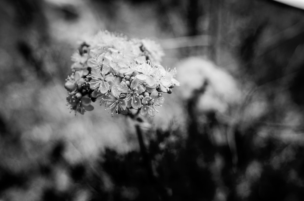 grayscale photo of white flower