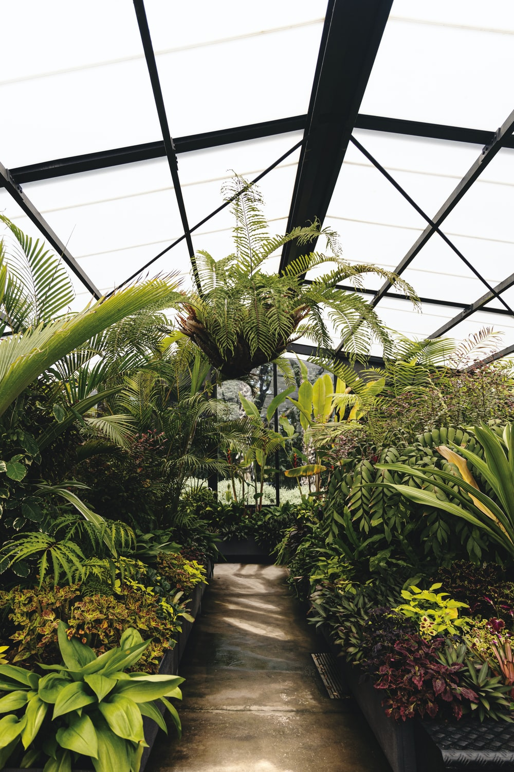 green plants inside greenhouse during daytime