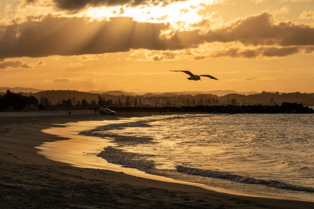 bird flying over the beach during sunset