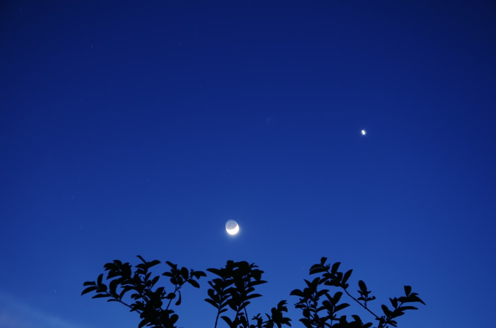 silhouette of plants under blue sky during night time