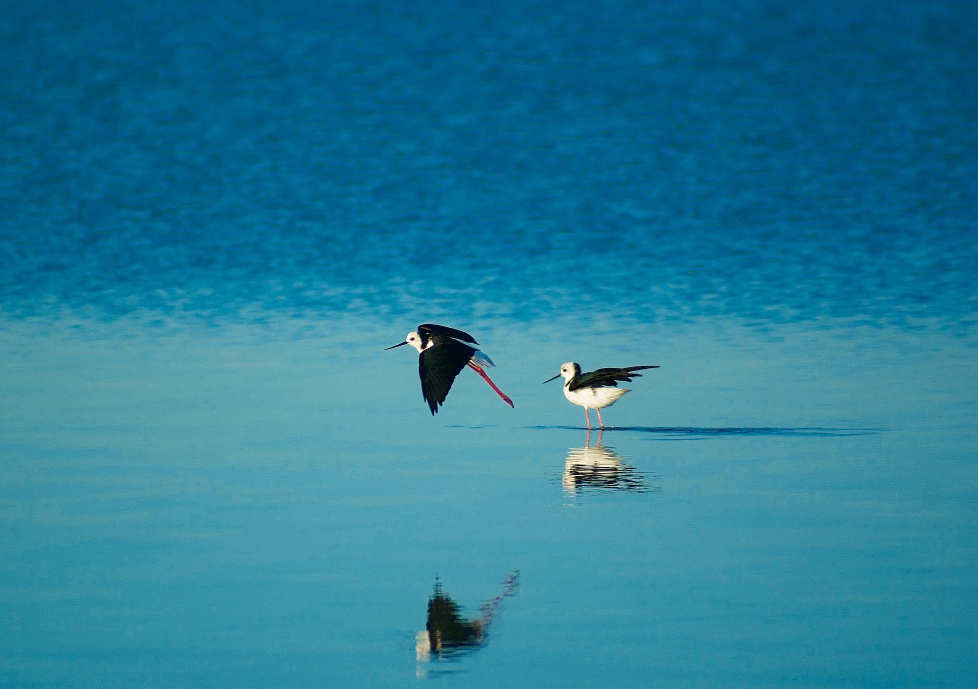 Птицы отражаются в зеркале воды