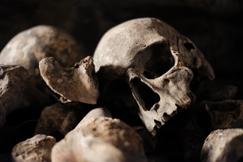 white and black skull on black surface