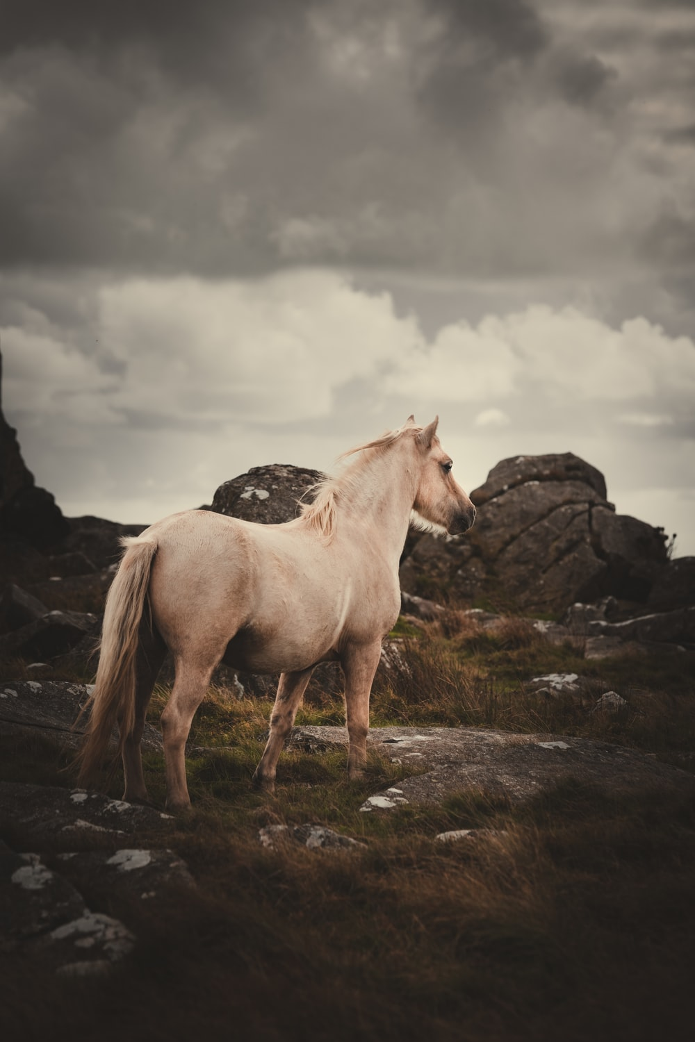 white horse on green grass field during daytime