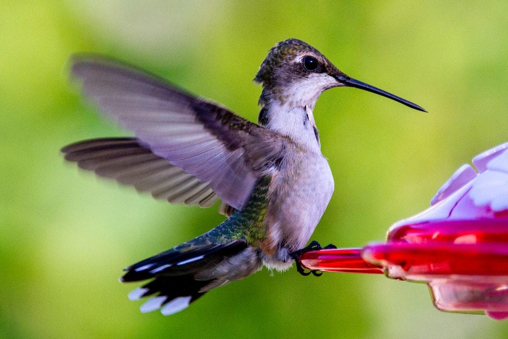 black and white humming bird flying during daytime