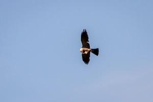 black and white bird flying under blue sky during daytime