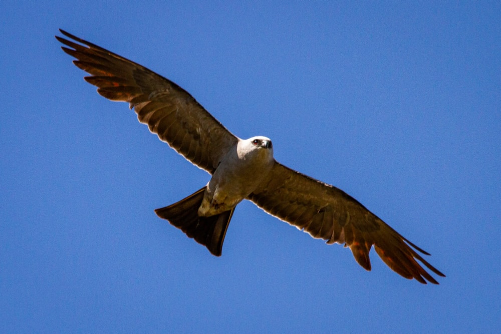 brown and white bird flying during daytime