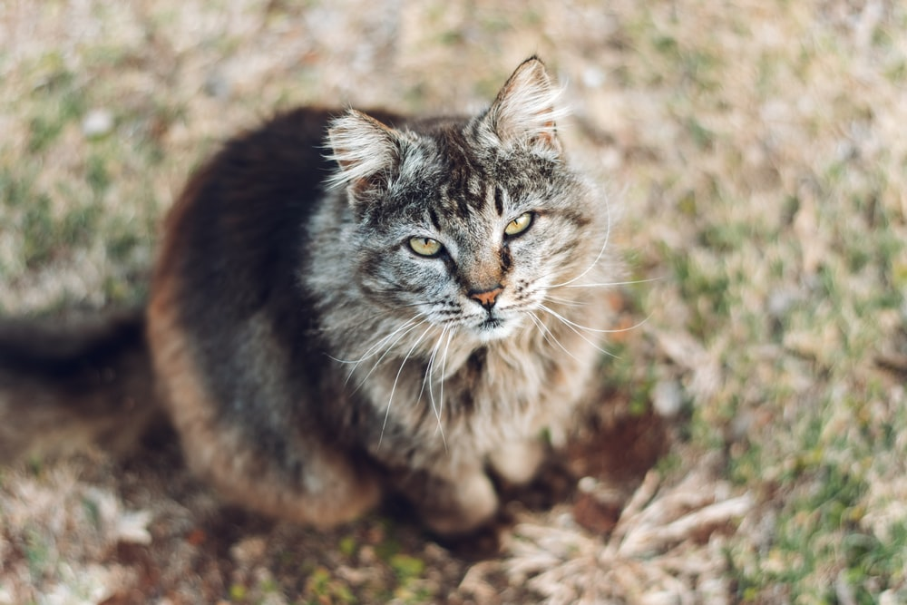 brown tabby cat on brown ground