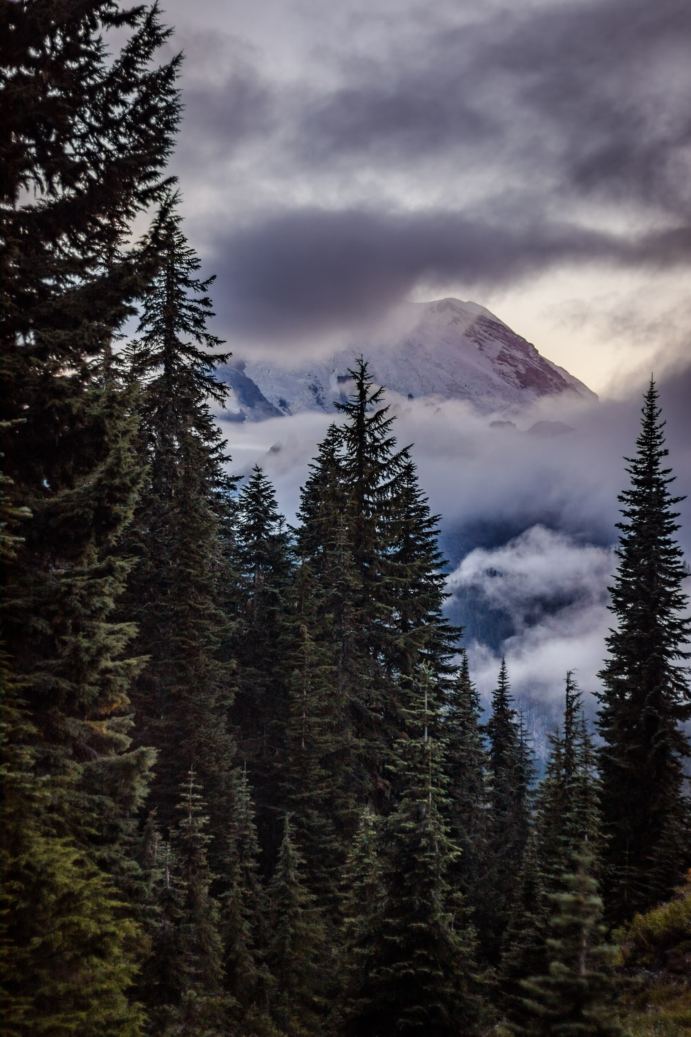 green pine trees near mountain under white clouds during daytime