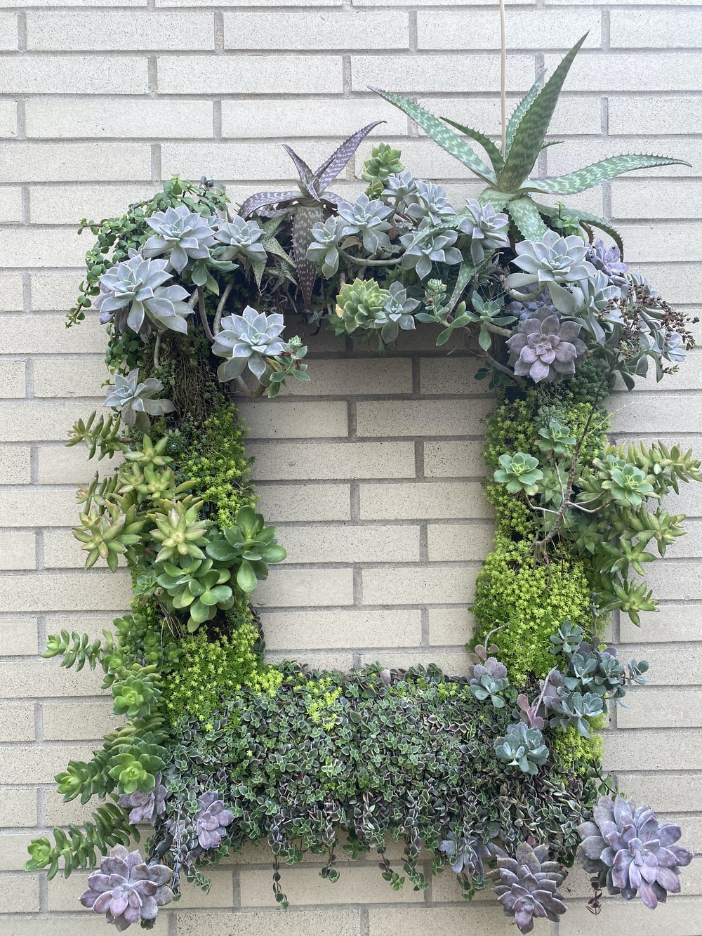 green plant on brown brick wall