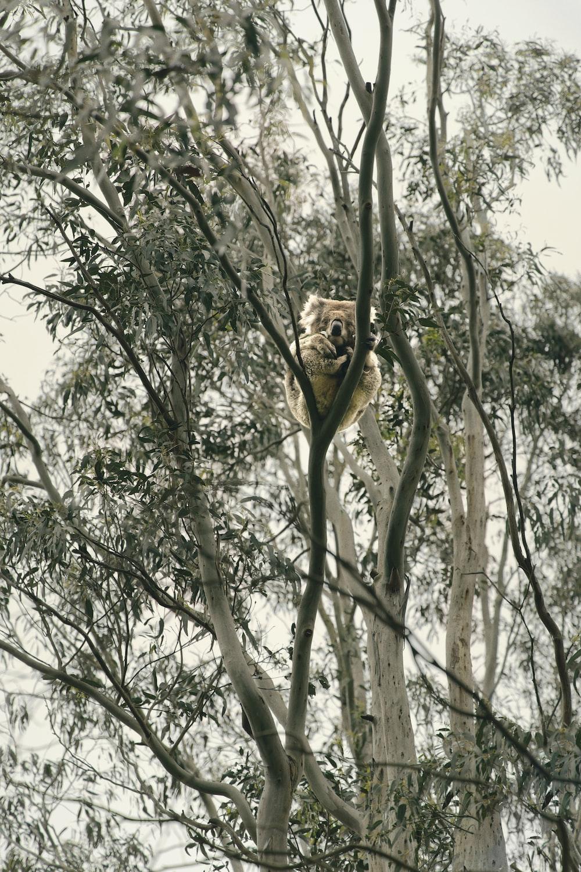 brown lion on brown tree branch during daytime
