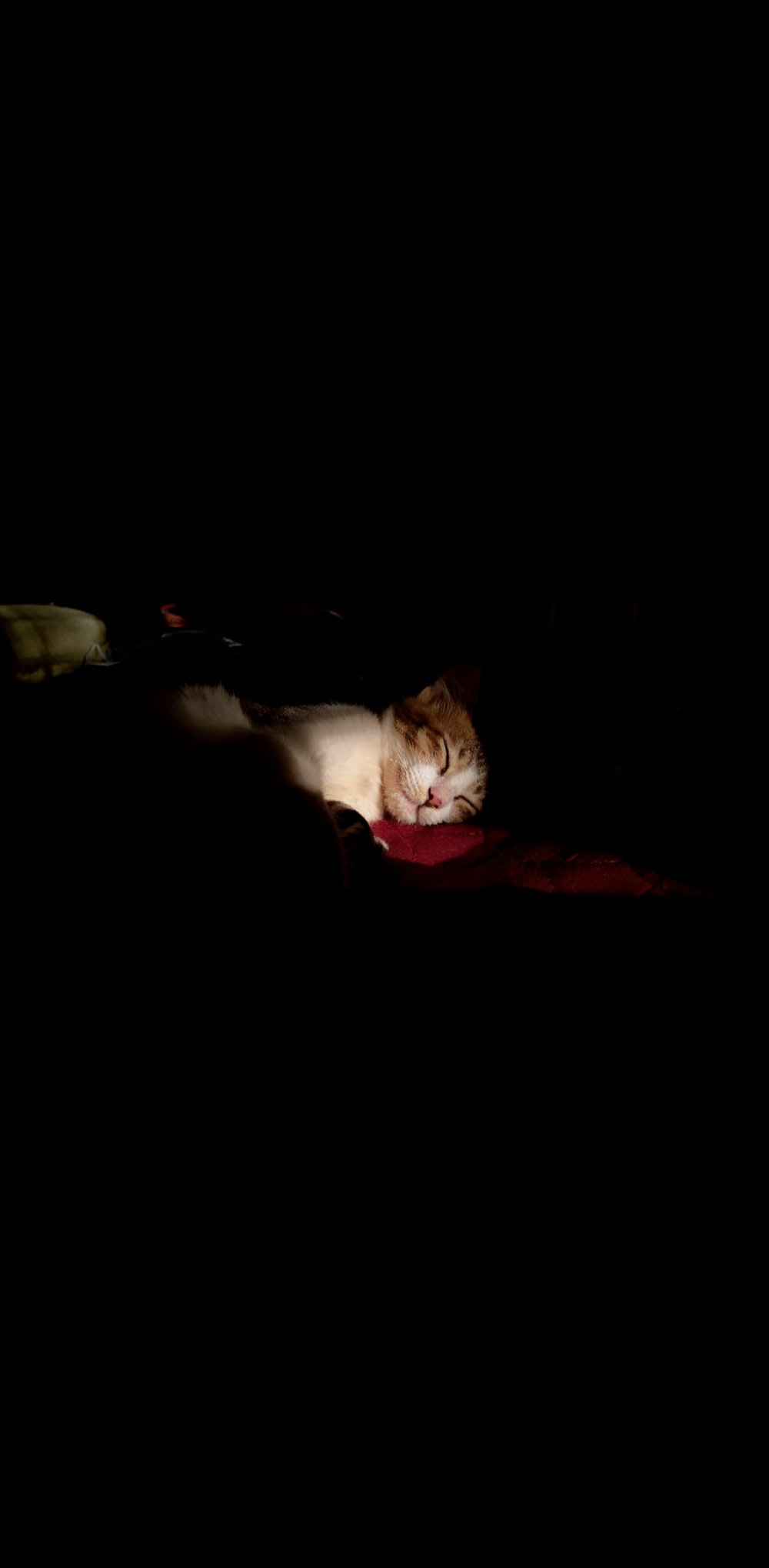 white and brown cat lying on red textile