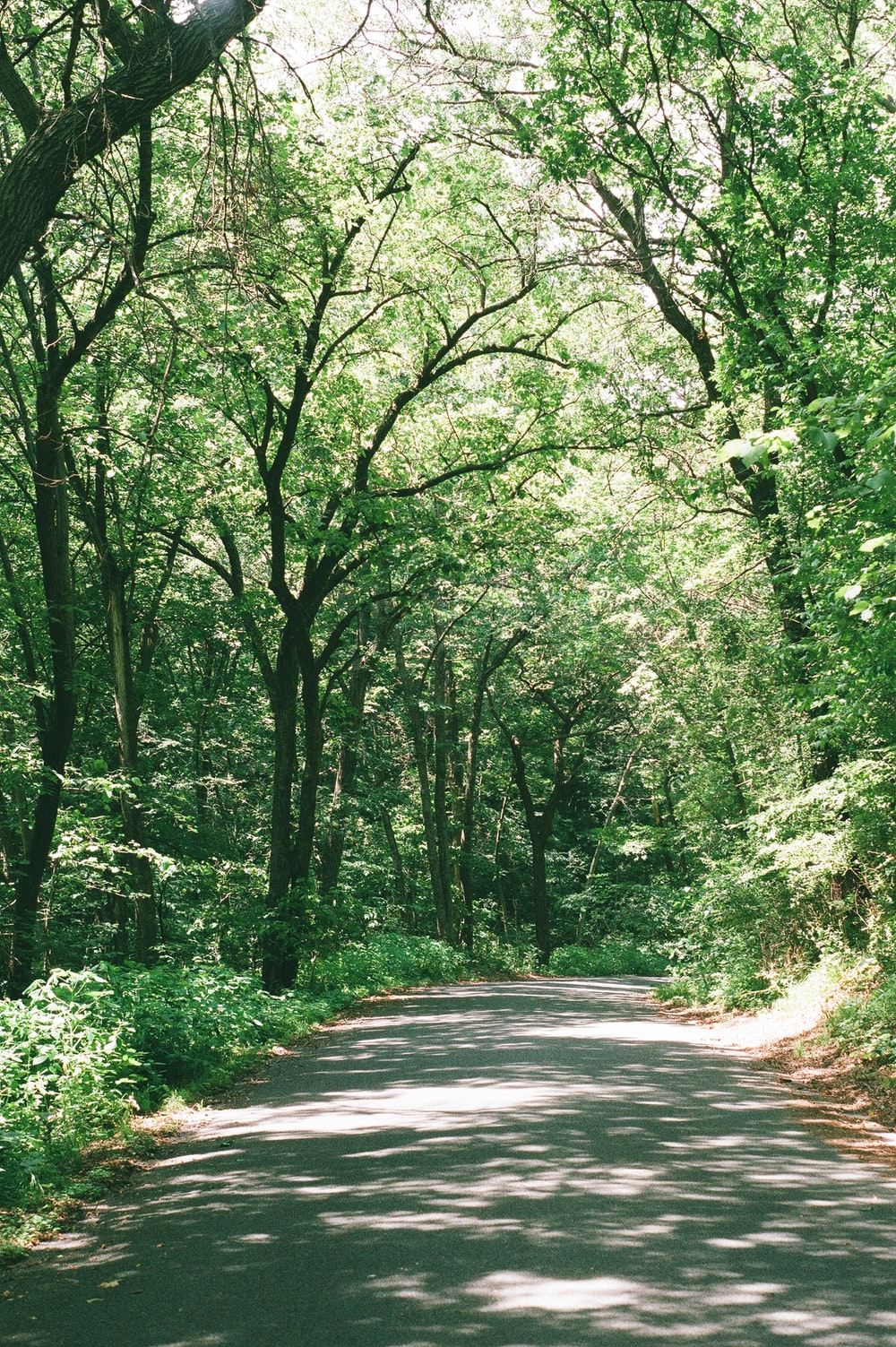 gray concrete road in between green trees during daytime