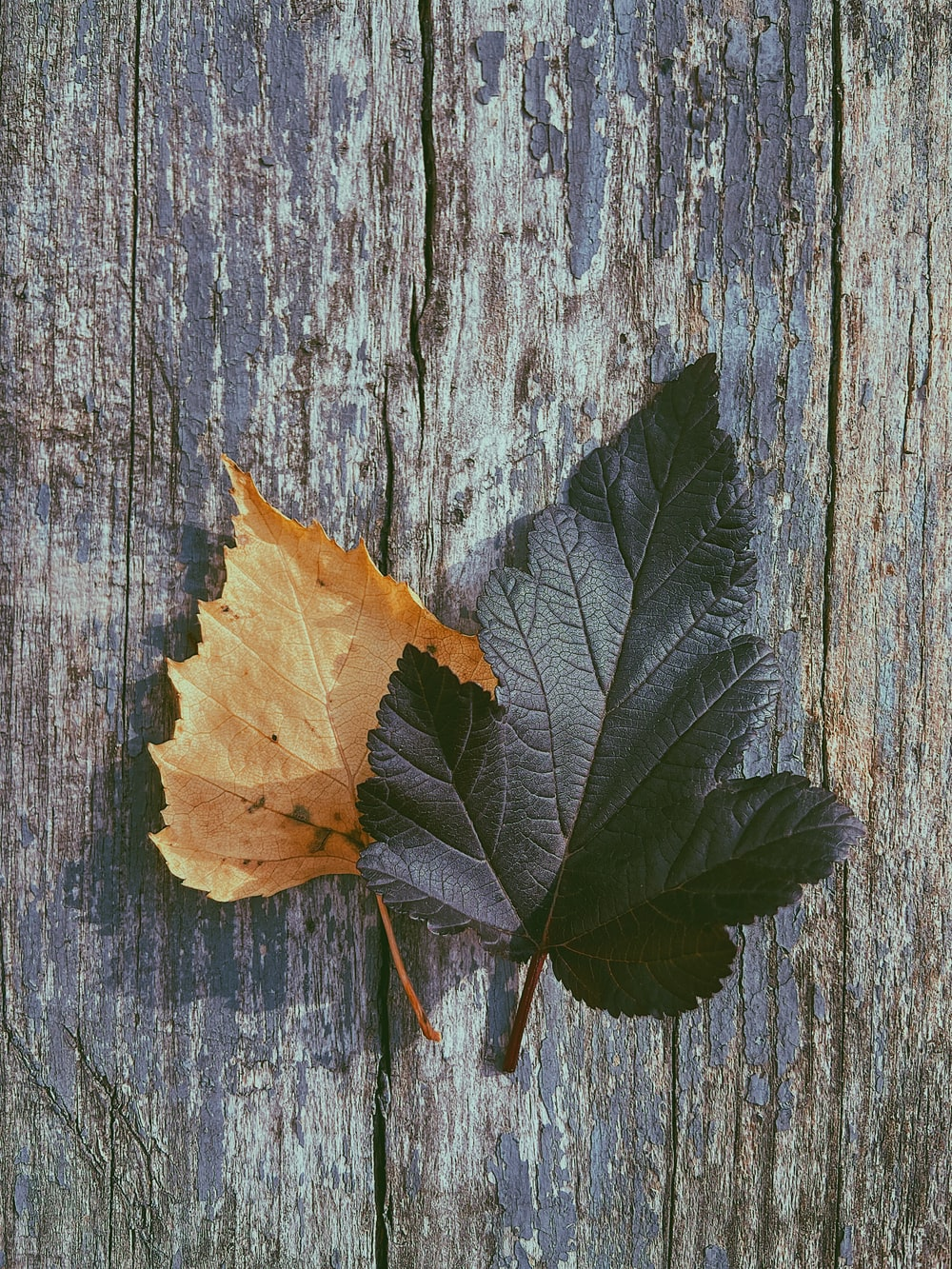 brown maple leaf on gray wooden surface