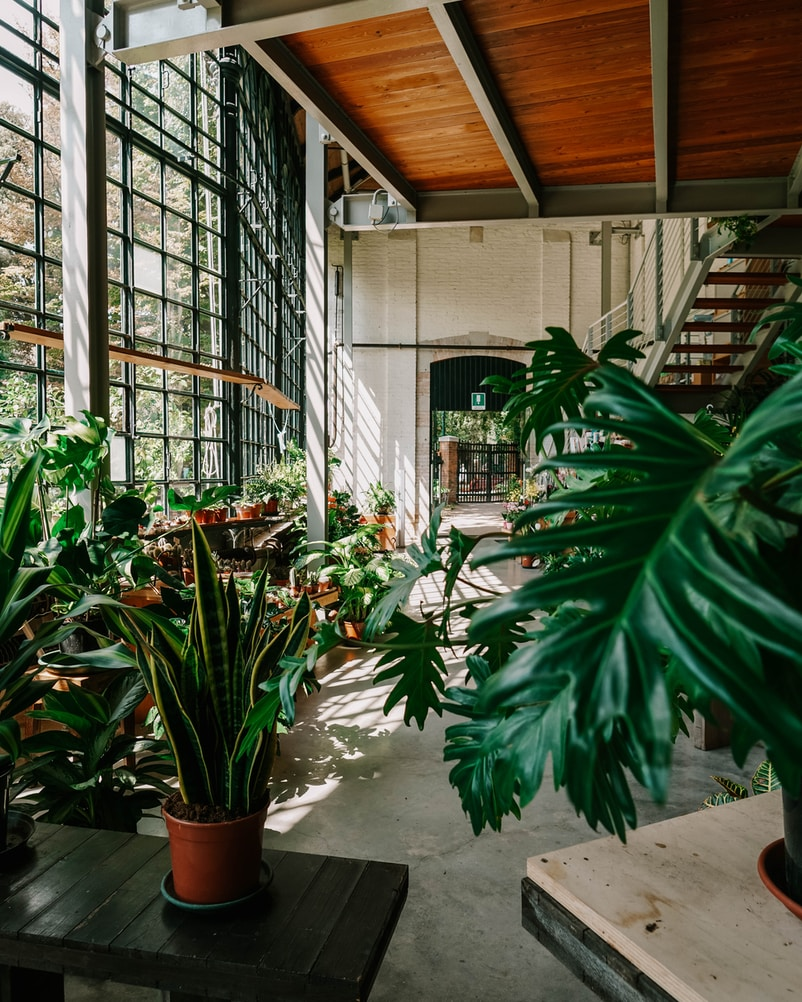 green potted plants inside building