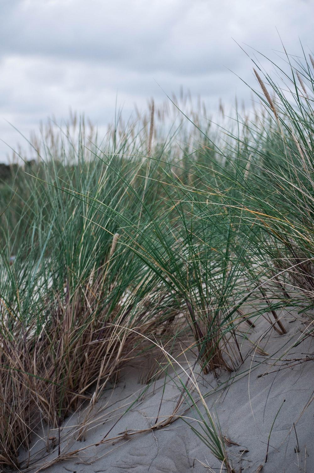 green grass on gray sand