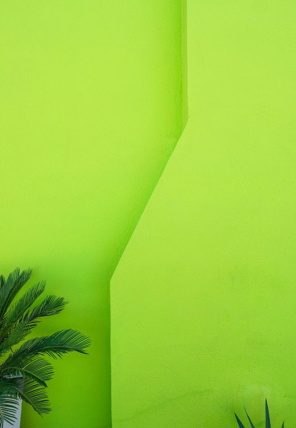 green palm tree beside green wall
