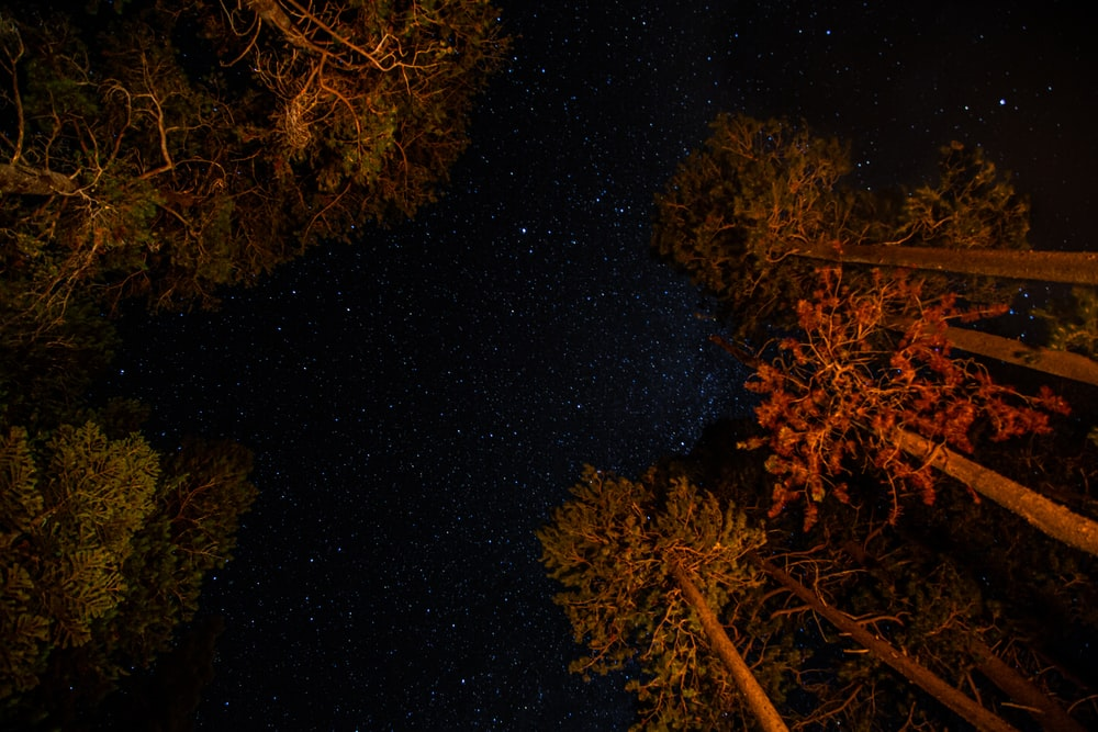 brown and green trees during night time