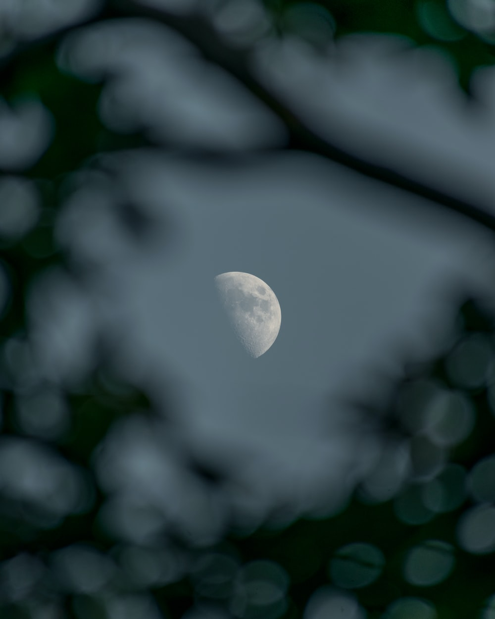 white moon on black tree branch