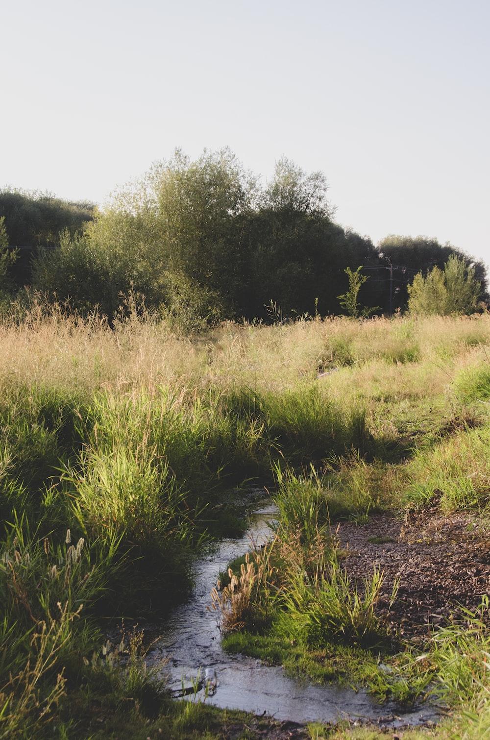 green grass field near river during daytime