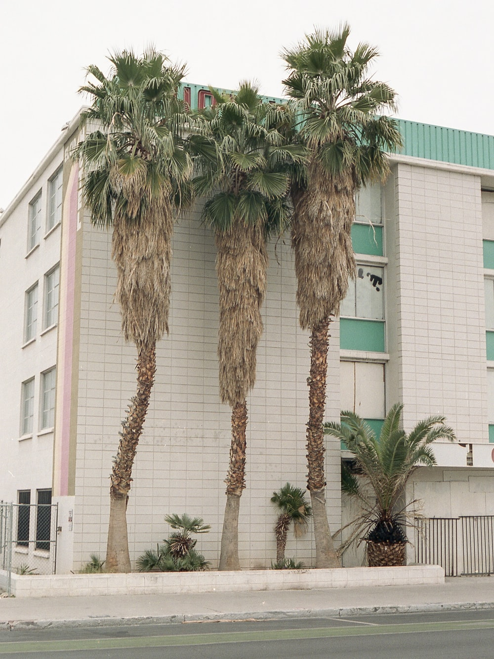 palm tree in front of white concrete building