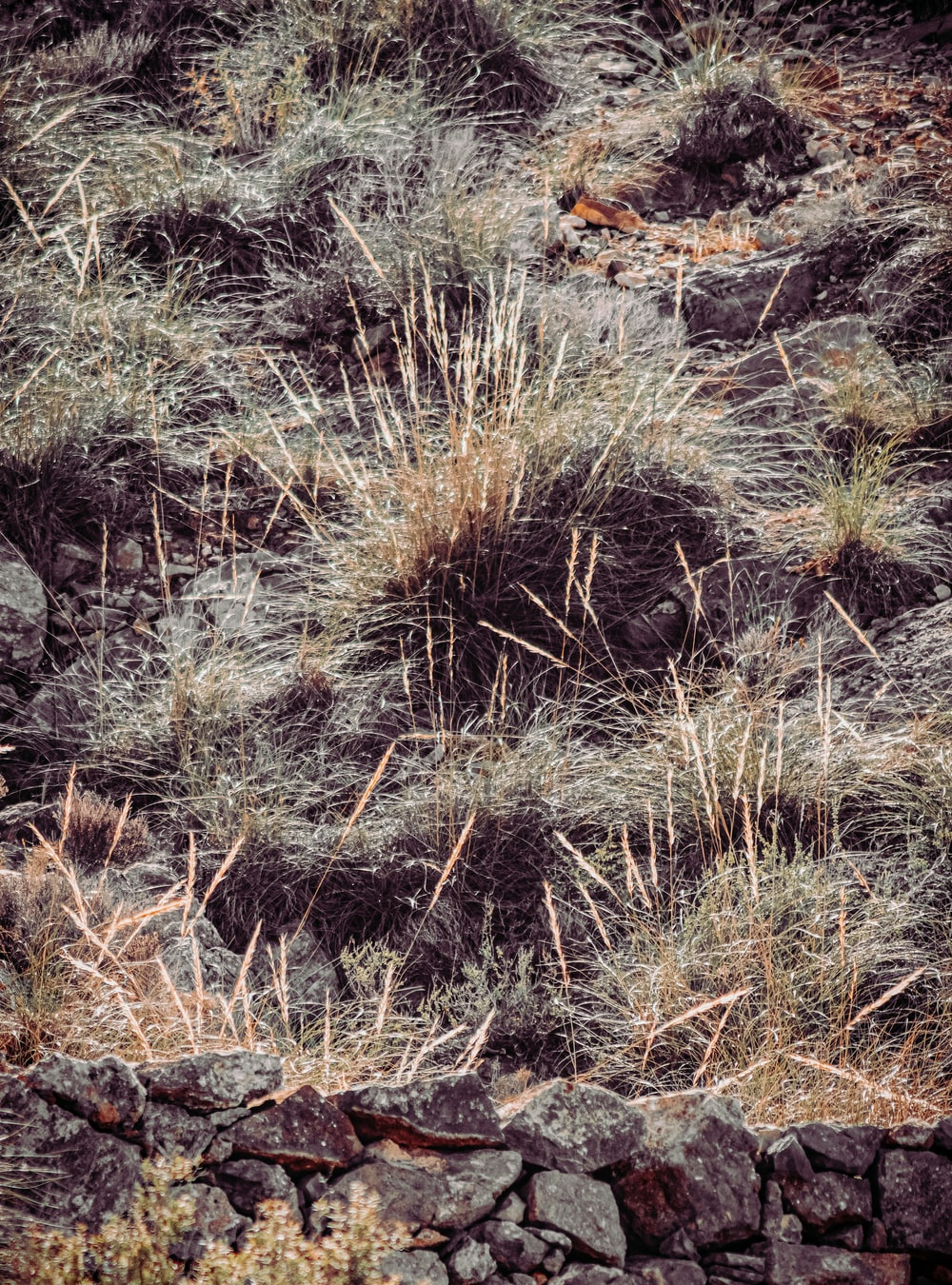 brown grass on brown and gray rocky ground