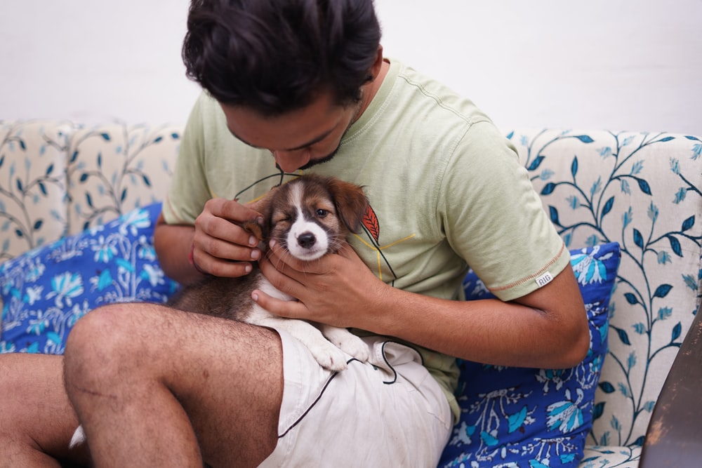 man in green crew neck t-shirt holding brown and white puppy