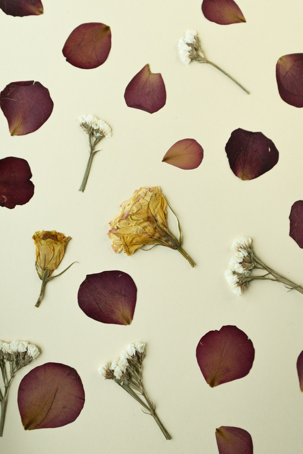 brown and white flower petals
