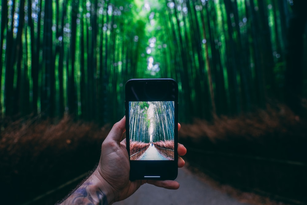 person holding black smartphone taking photo of green trees