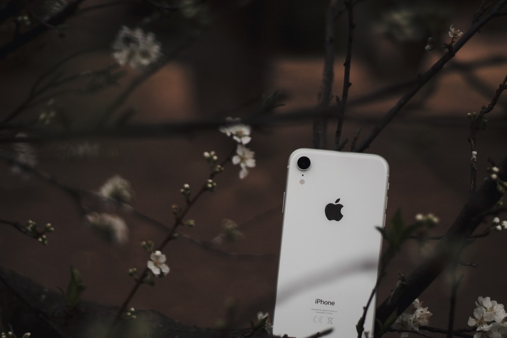 white iphone 4 on brown tree branch