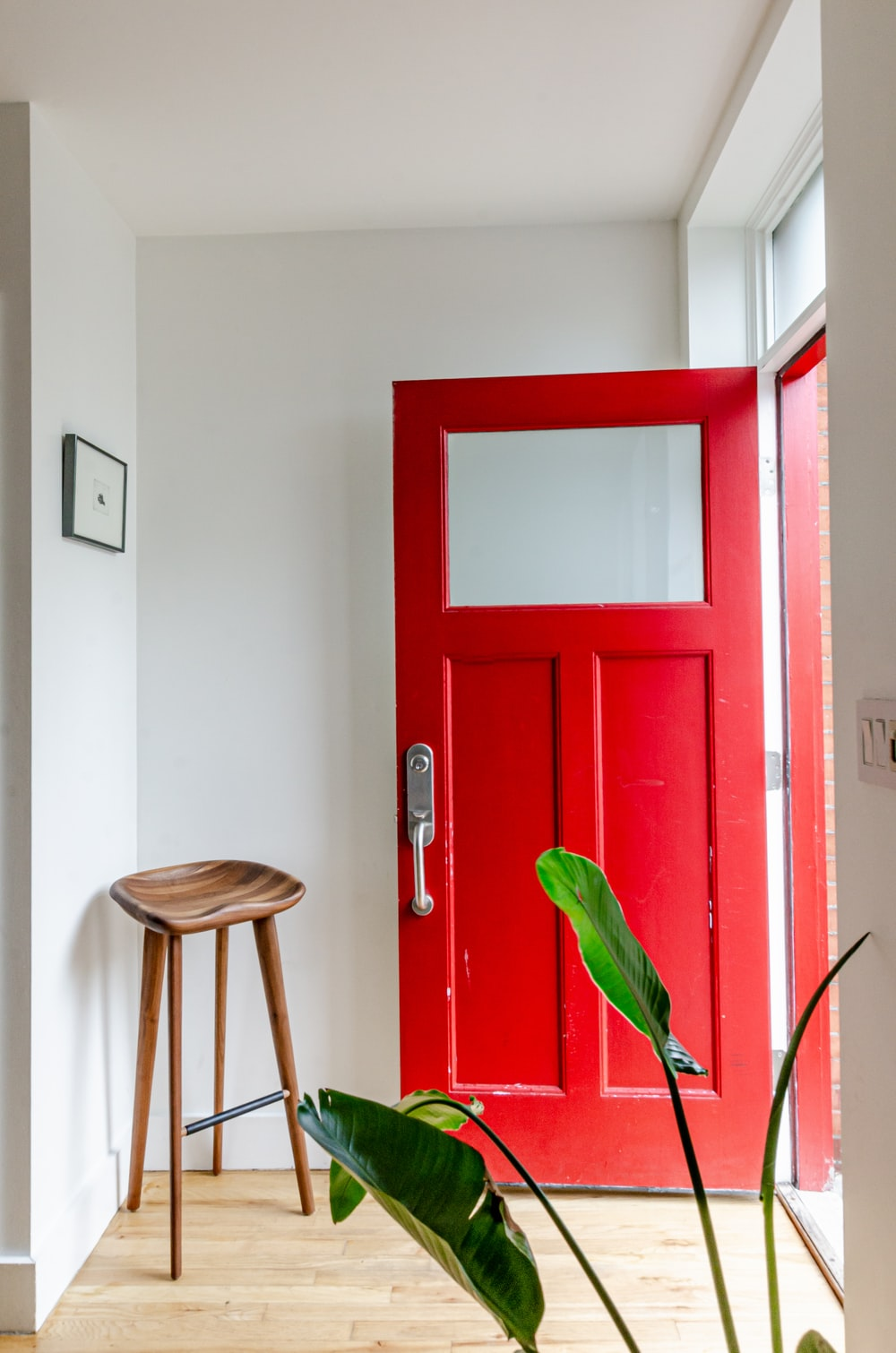 green plant on brown wooden door