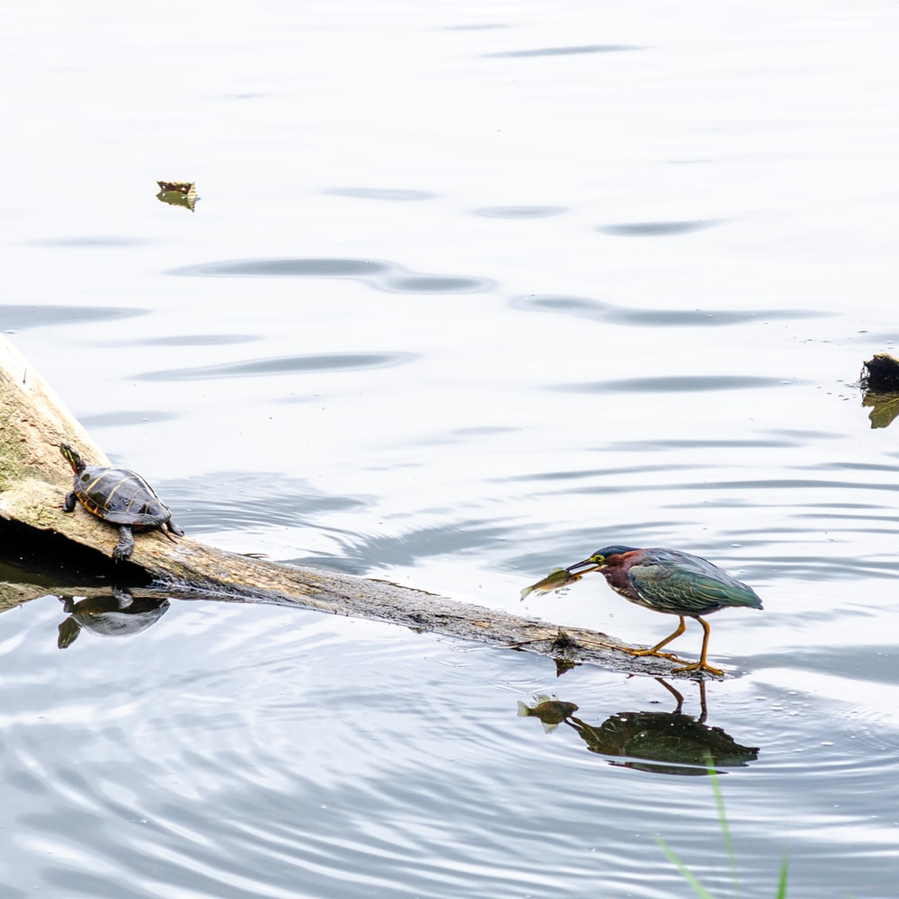 gray and green bird on brown tree branch on water during daytime
