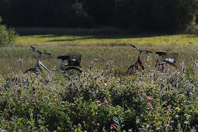 purple flower field during daytime shamrock zoom background