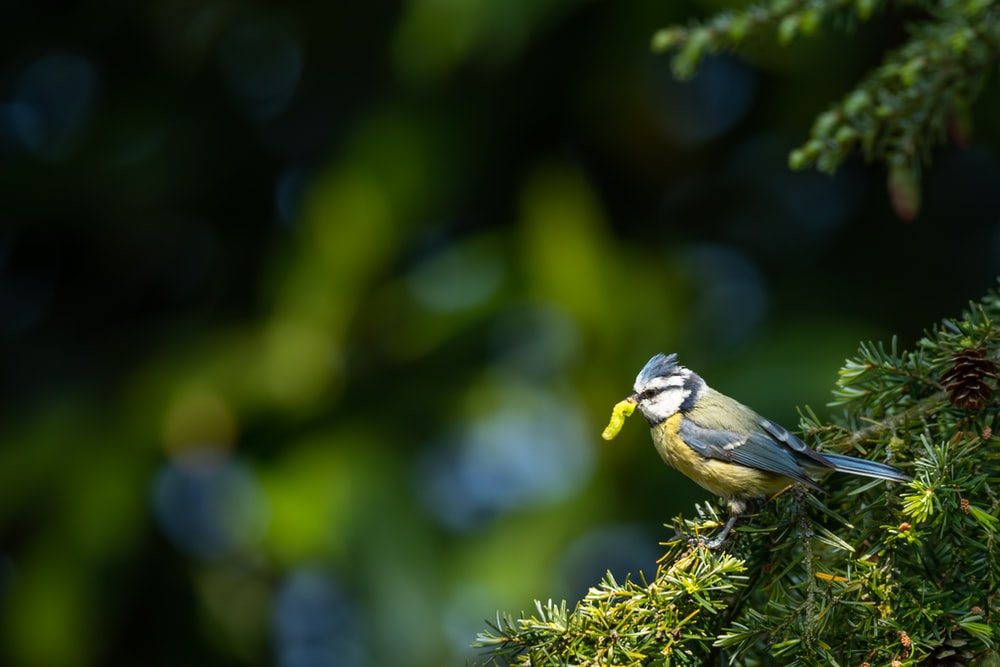 gray and yellow bird on green tree branch during daytime