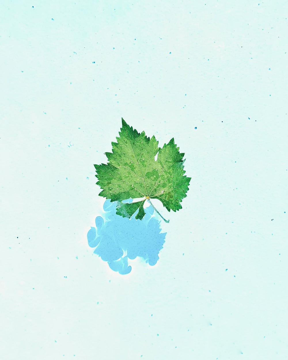 green and blue tree illustration