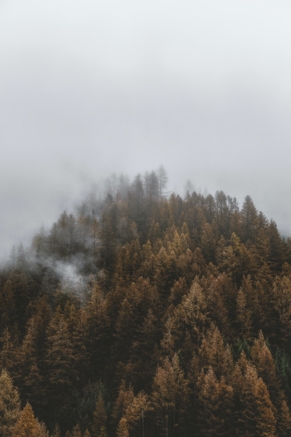 green and brown trees under white sky during daytime
