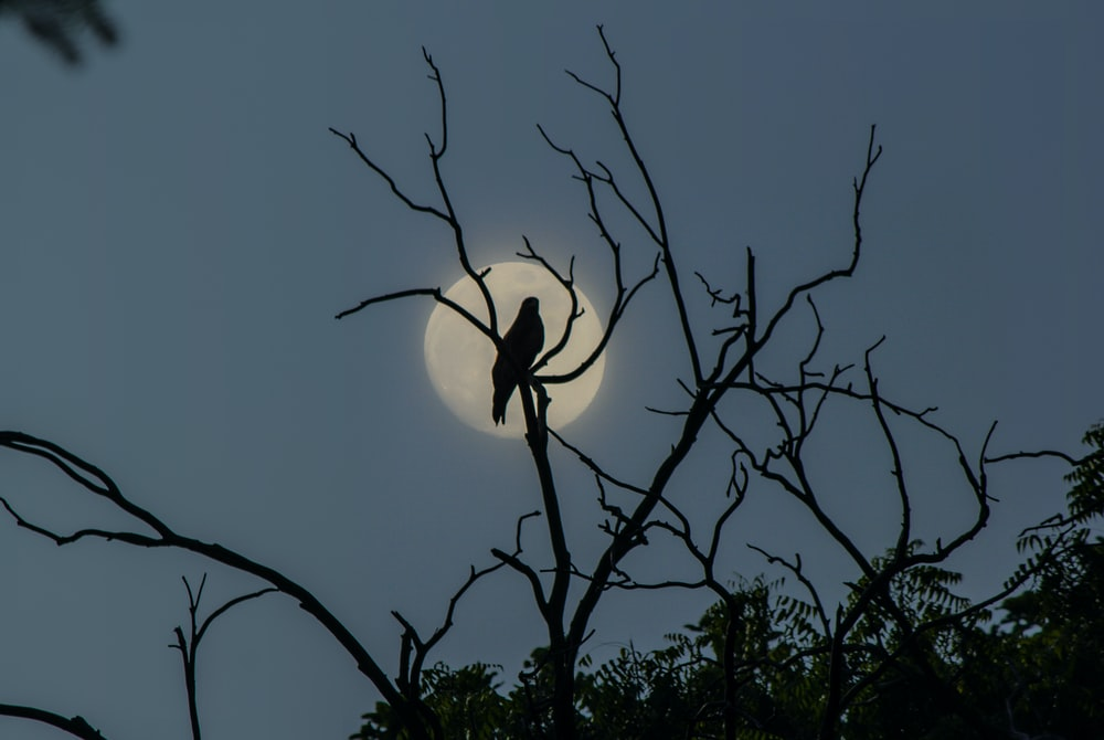 black and white tree branch with moon