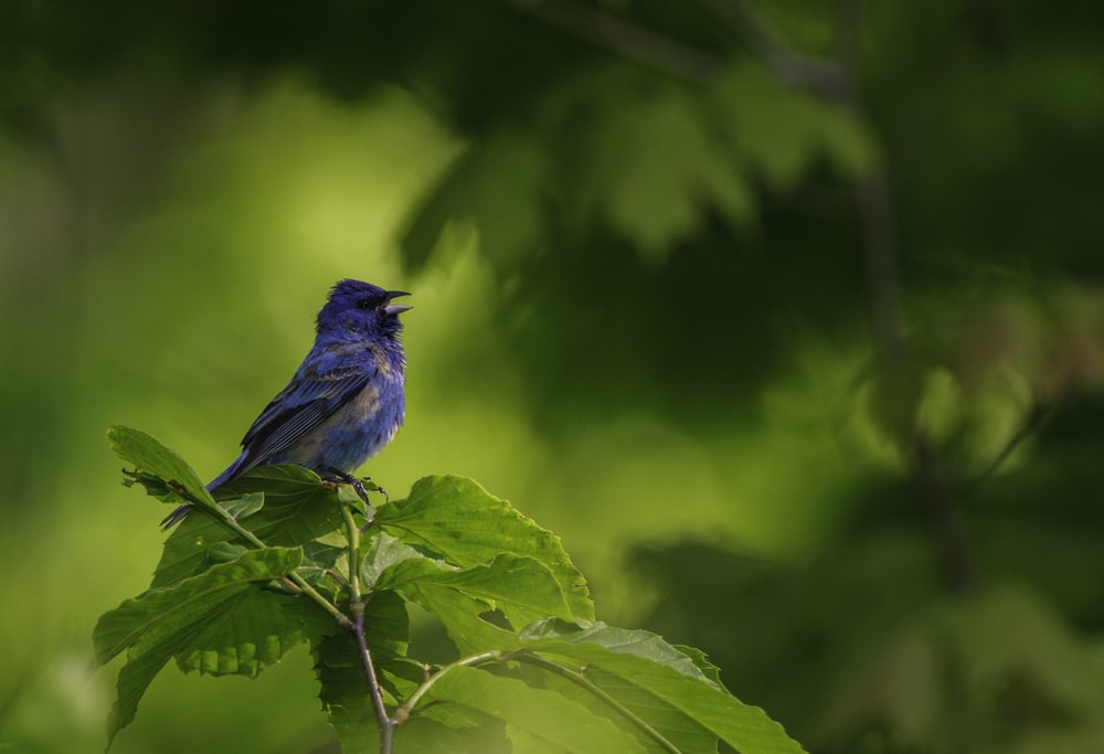blue bird perched on brown stem